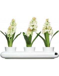 Vasi per piante aromatiche Hold di Sagaform